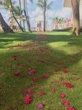 Decoración de la ceremonia de boda El casarse en la isla Pétalos color de rosa rojos en la hierba Foto de archivo libre de regalías