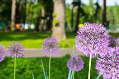 Decoración de la flor de la cebolla Imágenes de archivo libres de regalías