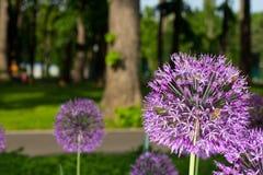 Decoración de la flor de la cebolla Imagen de archivo libre de regalías