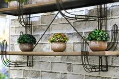 Decoración de la decoración interior y del jardín Tres potes con las plantas encendido Fotos de archivo libres de regalías