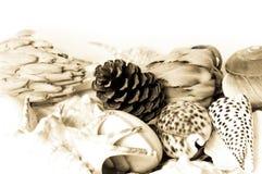 Decoración de la naturaleza Fotografía de archivo libre de regalías