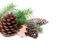 Decoración de la Navidad con el árbol de abeto y conos aislados en un fondo blanco Imágenes de archivo libres de regalías