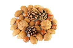 Decoración de la Navidad con las nueces y los conos mezclados del pino Imagen de archivo libre de regalías