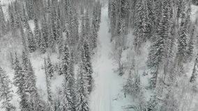 Decoración de la Navidad con las ramas del abeto almacen de metraje de vídeo