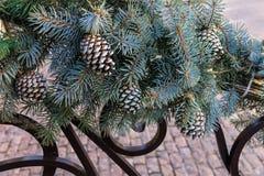 Decoración de la Navidad con las ramas de un árbol de navidad con el cono imágenes de archivo libres de regalías
