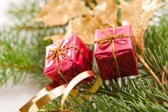 Decoración de la Navidad del acebo Foto de archivo libre de regalías