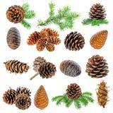 Decoración de la Navidad del ajuste de los conos de la rama y del cedro de árbol de abeto Fotografía de archivo libre de regalías