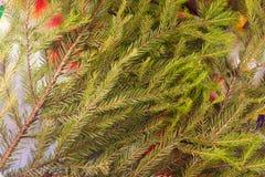 Decoración de la Navidad del fondo de las ramas del abeto, del ` s de la Navidad y del Año Nuevo Fotografía de archivo libre de regalías