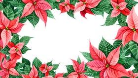 Decoración de la Navidad de la poinsetia Confine la tarjeta de la decoración, web de la cubierta, impresión del marco Elemento de fotos de archivo libres de regalías