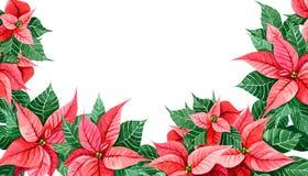 Decoración de la Navidad de la poinsetia Confine la tarjeta de la decoración, web de la cubierta, impresión del marco Elemento de Imagenes de archivo