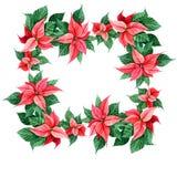 Decoración de la Navidad de la poinsetia Tarjeta cuadrada de la decoración, web de la cubierta, impresión del marco Elemento del  imagen de archivo libre de regalías