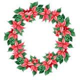 Decoración de la Navidad de la poinsetia Tarjeta redonda de la decoración, web de la cubierta, impresión del marco Elemento del d Imágenes de archivo libres de regalías