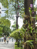 Decoración de la orquídea en Bangkok fotos de archivo