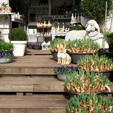 Decoración de la primavera y de Pascua Fotografía de archivo libre de regalías