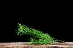 Decoración de la ramita del árbol de pino Fotografía de archivo libre de regalías
