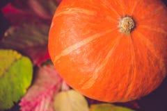 Decoración de la temporada de otoño para la acción de gracias o Halloween Foto de archivo