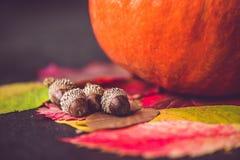 Decoración de la temporada de otoño para la acción de gracias o Halloween Foto de archivo libre de regalías