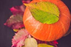 Decoración de la temporada de otoño para la acción de gracias o Halloween Fotos de archivo