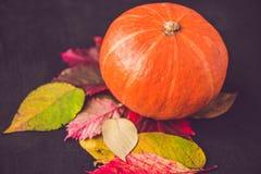 Decoración de la temporada de otoño para la acción de gracias o Halloween Imagenes de archivo
