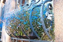 Decoración de la ventana con las flores Imagenes de archivo