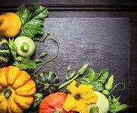 Decoración de las calabazas coloreadas de diversas variedades con los troncos y las hojas, fondo del otoño Imagen de archivo libre de regalías