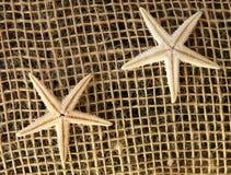 Decoración de las estrellas de mar Imagen de archivo