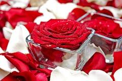 Decoración de las rosas Foto de archivo libre de regalías