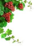 Decoración de las uvas de vino Fotografía de archivo