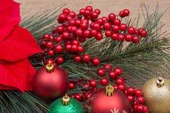Decoración de las vacaciones de invierno: Arbusto rojo floreciente de la poinsetia, del pino, de la baya del día de fiesta y bola foto de archivo