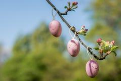 Decoración de los huevos de Pascua en una rama de árbol fotografía de archivo libre de regalías
