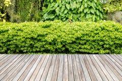Decoración de madera del jardín del decking y de la planta Foto de archivo libre de regalías