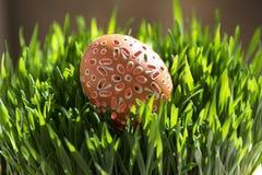 Decoración de madera - la naranja pintó el huevo en hierba verde joven del grano Imagen de archivo libre de regalías