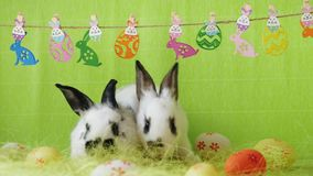 Decoración de Pascua con dos conejitos metrajes