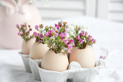 Decoración de Pascua - flores en cáscaras de huevo Imagen de archivo libre de regalías
