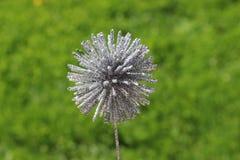 Decoración de plata de la planta en prado borroso de la hierba Fotografía de archivo