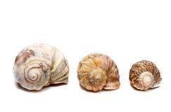 Decoración de Shell Fotos de archivo