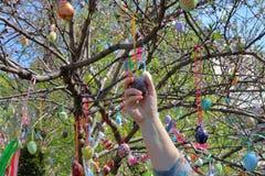 Decoración de un árbol floreciente para el día de fiesta de Pascua Fotos de archivo libres de regalías