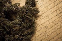 Decoración del Año Nuevo con el pino Imagen de archivo