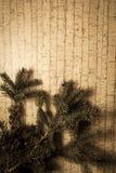 Decoración del Año Nuevo con el pino Imagenes de archivo
