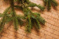 Decoración del Año Nuevo con el pino Fotos de archivo libres de regalías