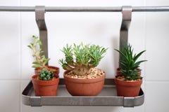 Decoración del cactus Foto de archivo
