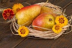 Decoración del día de la acción de gracias del otoño de la fruta de las peras Fotografía de archivo libre de regalías