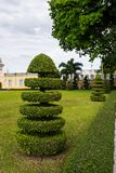 Decoración del jardín del árbol del corte en el templo asiático Fotos de archivo