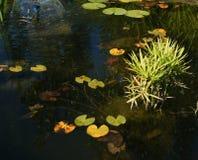 Decoración del jardín Fotografía de archivo