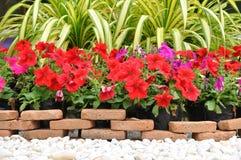 Decoracion Del Jardin Con La Roca Y Las Flores Blancas Foto De