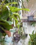 Decoración del jardín con los pequeños árboles Imagen de archivo libre de regalías