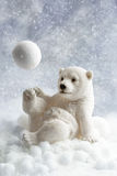 Decoración del oso polar Imagenes de archivo