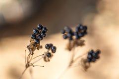 Decoración del otoño con la planta secada Fotografía de archivo