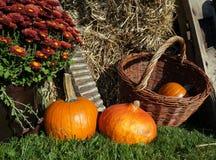 Decoración del otoño con las calabazas, el crisantemo de la cesta de mimbre y la paja Imagen de archivo libre de regalías