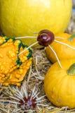 Decoración del otoño con las calabazas y una araña hecha de castañas y de un erizo imágenes de archivo libres de regalías